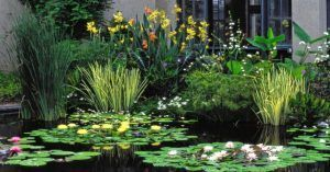 Plantas acuaticas en pantanos