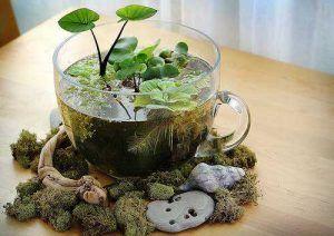 Decoración con plantas en el agua